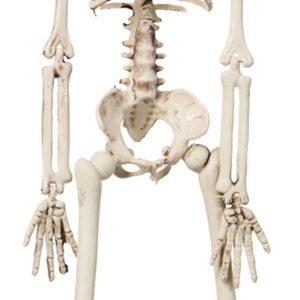 Köp hängande skelett 42 cm för halloween dekorationer | Materialbutiken